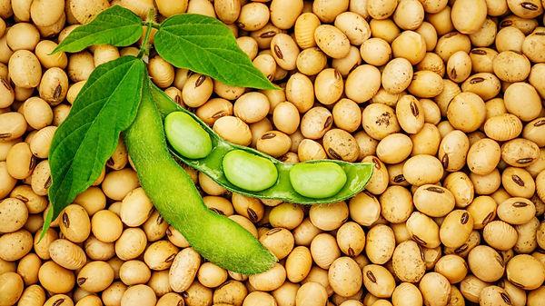 soybeans-1270x714.jpg