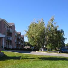Terrains avec beaux arbres matures