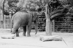 Melboune Zoo