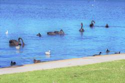 Albert Park Lake