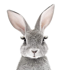 LAPIN GD cils adoucie.png