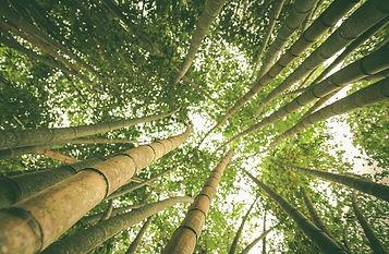 bambooforest. bakbamboo.com