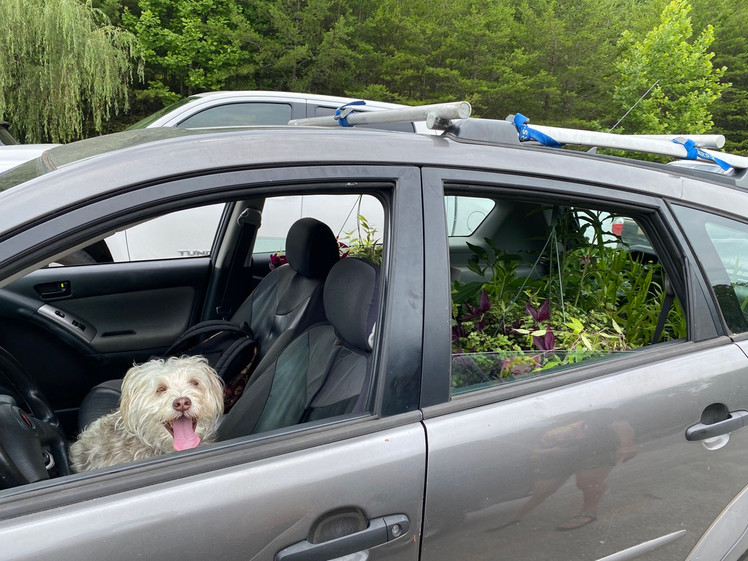 RiverLink brought a special assistant! If you'd like to know more about conservation and restoration of the french broad watershed these folks do amazing work, check them out!