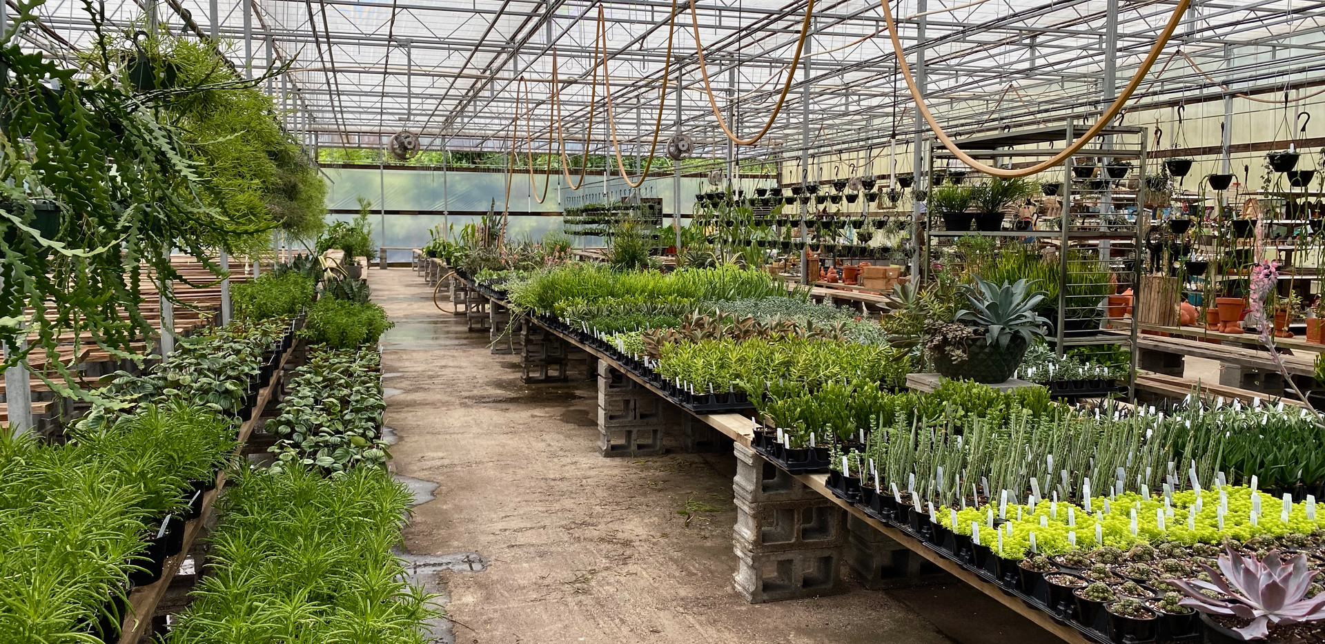 Not our full spring selection, but still a wide range of succulents!
