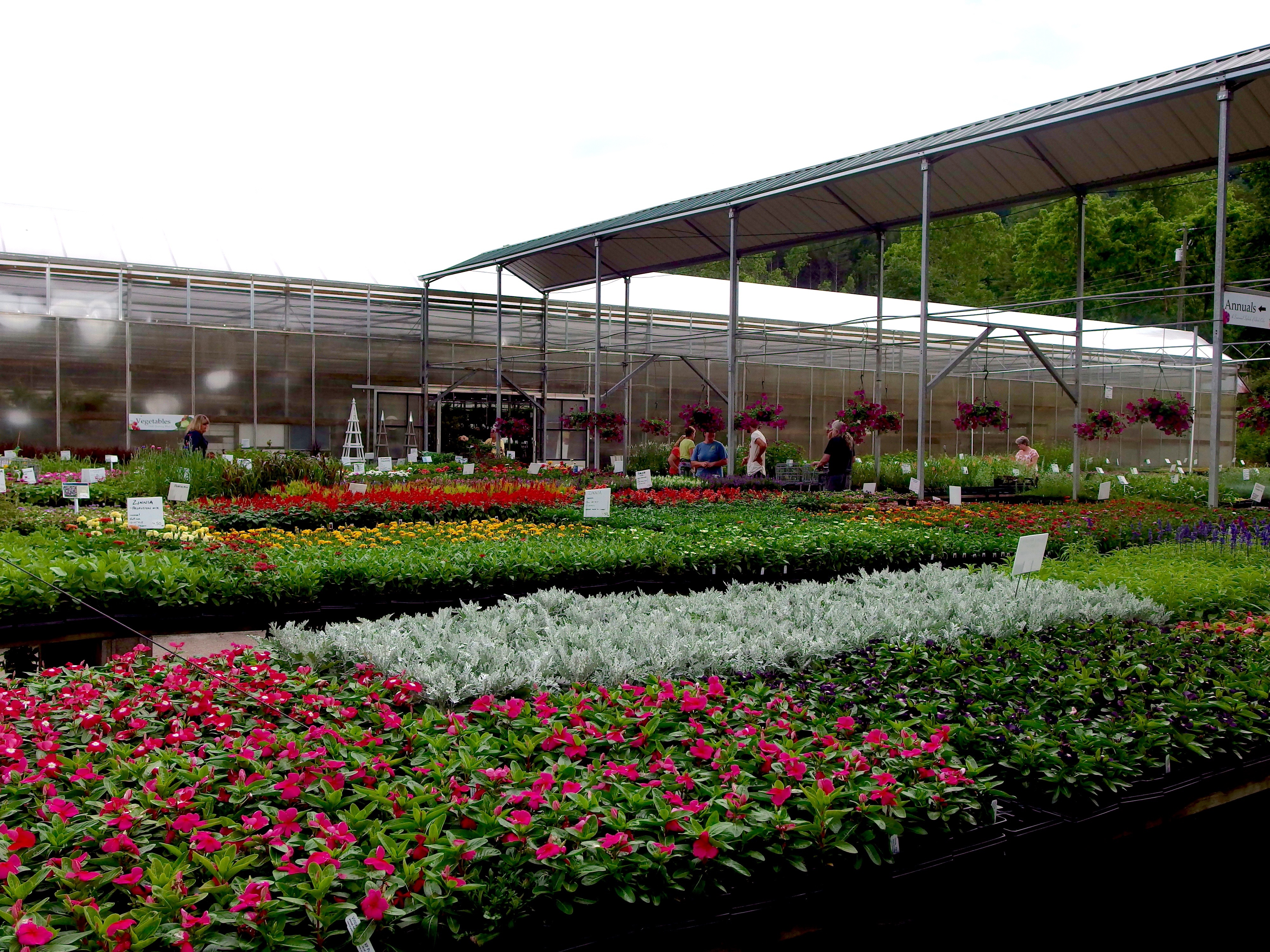 Mixed bedding annuals 2