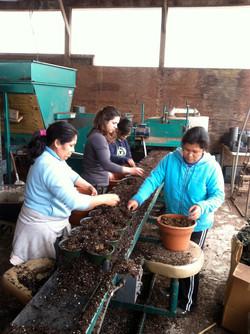 Seeding plants on the 'line'.JPG