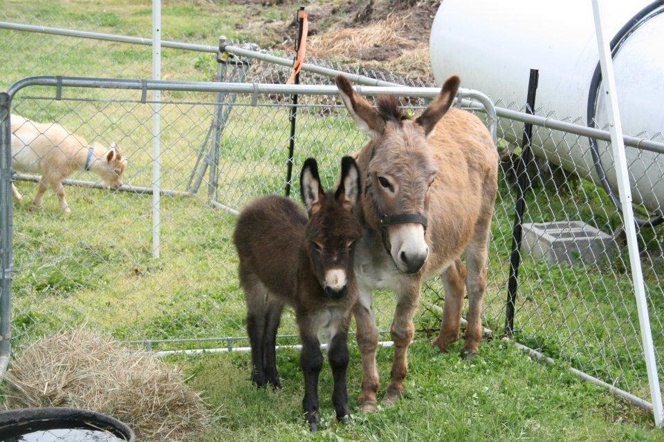 Herb Fest Petting Zoo.jpg