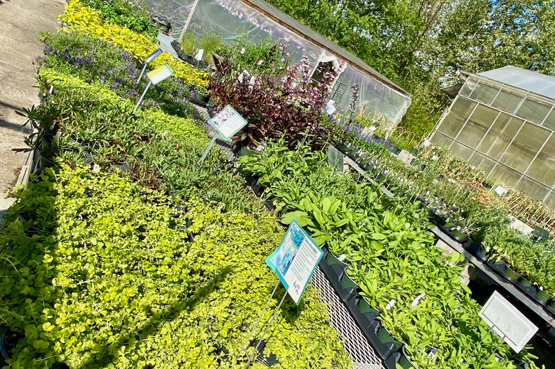 We have a range of sun or shade groundcovers and rock garden plants!