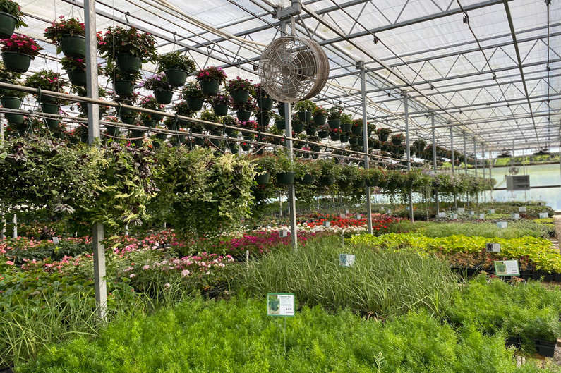 Asparagus Fern, Spikes, Alternanthera, Sweet Potato Vine & more!