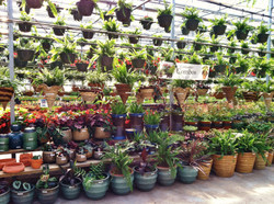 Container Gardens.JPG