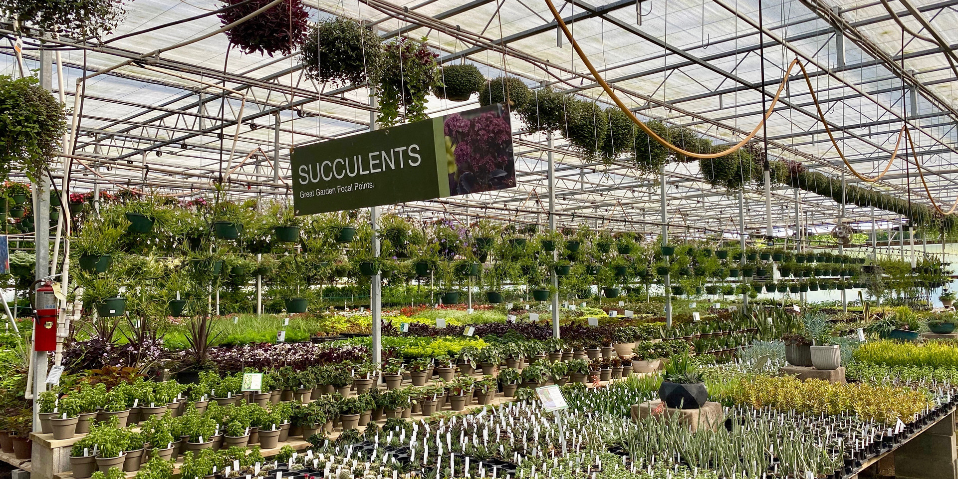 Succulent heaven!