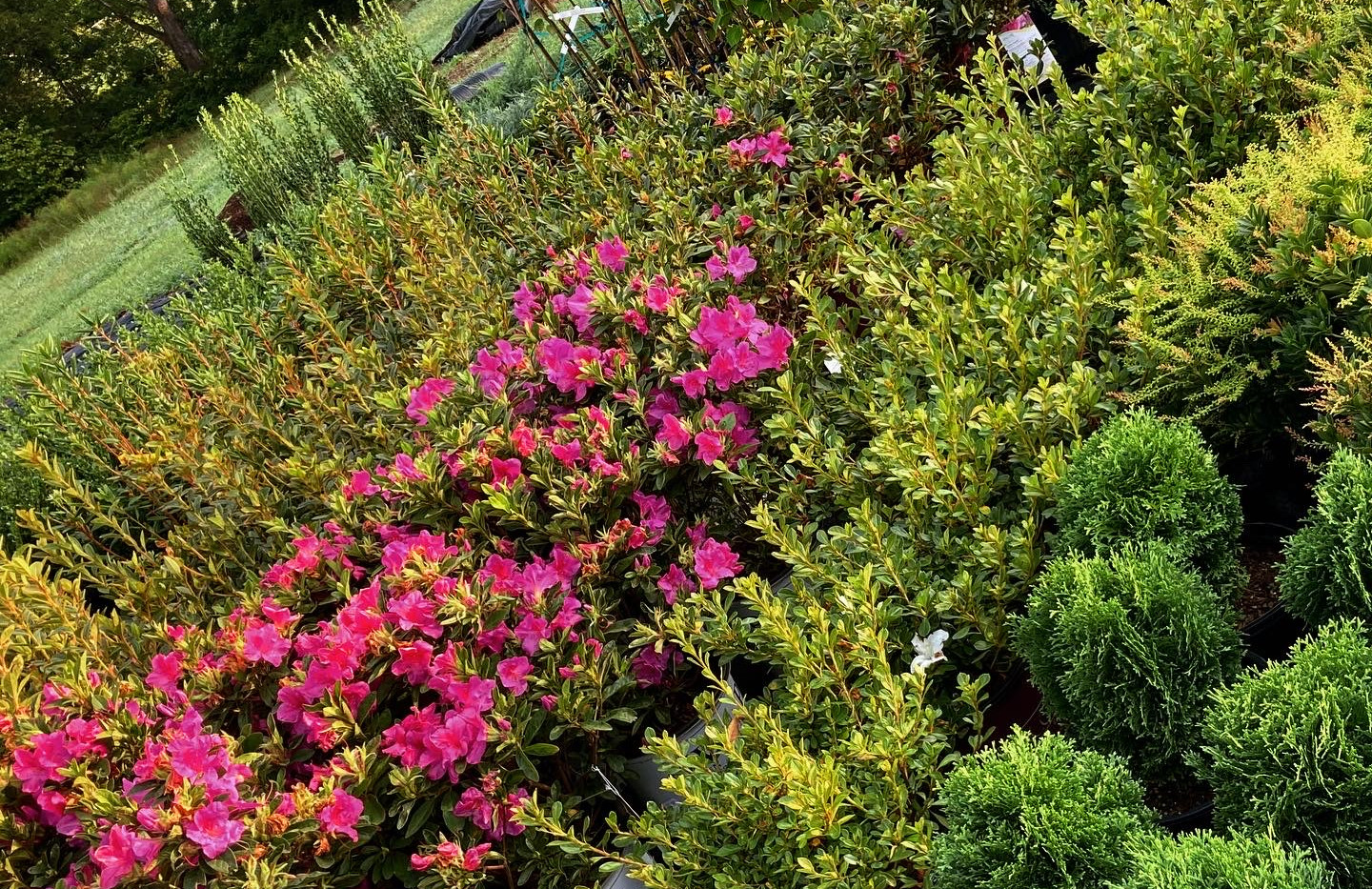 Wide selection of shrubs and trees - check out the availability list!