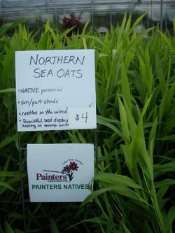 Native grass.JPG