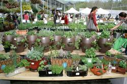 Herb Festival Combo Pots.jpg