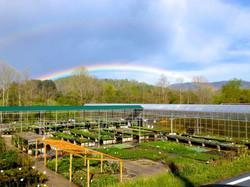 rainbow over painters