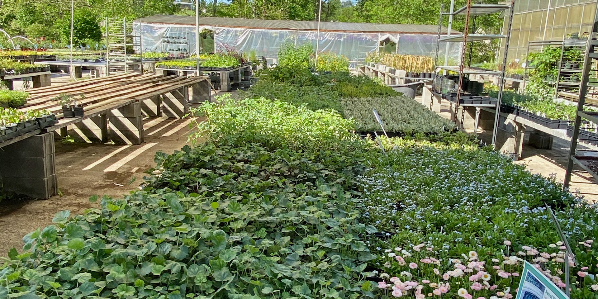 "A range of shade tolerant plants in 4"" flats for mass plantings"