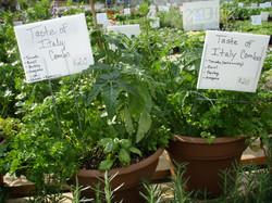 Veggie Porch Pots.JPG