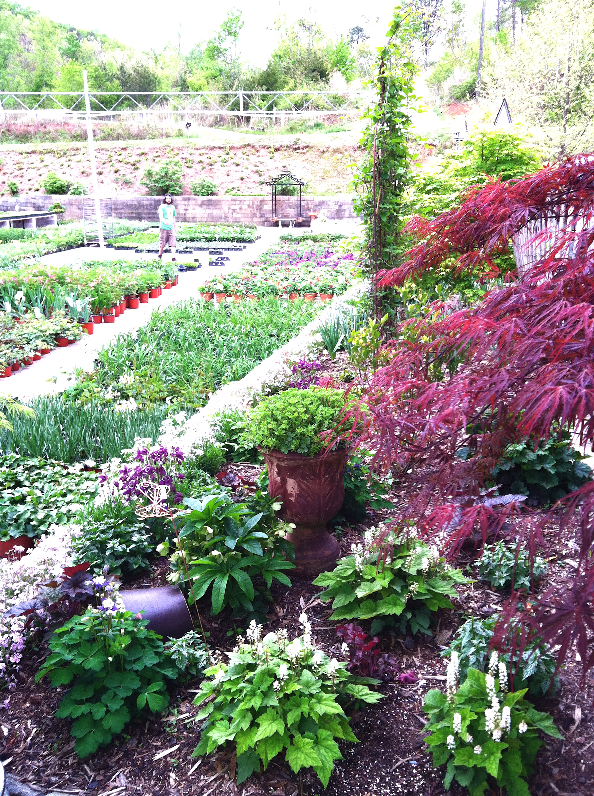 New Gardens.JPG