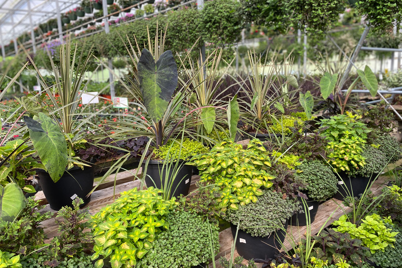 Still lots of lovely combo pots for sun & shade!  All have been discounted at this point!