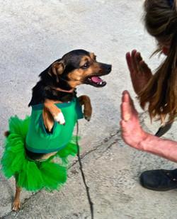 St. Patty's Dobby high five