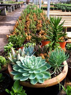 Cacti & more.JPG