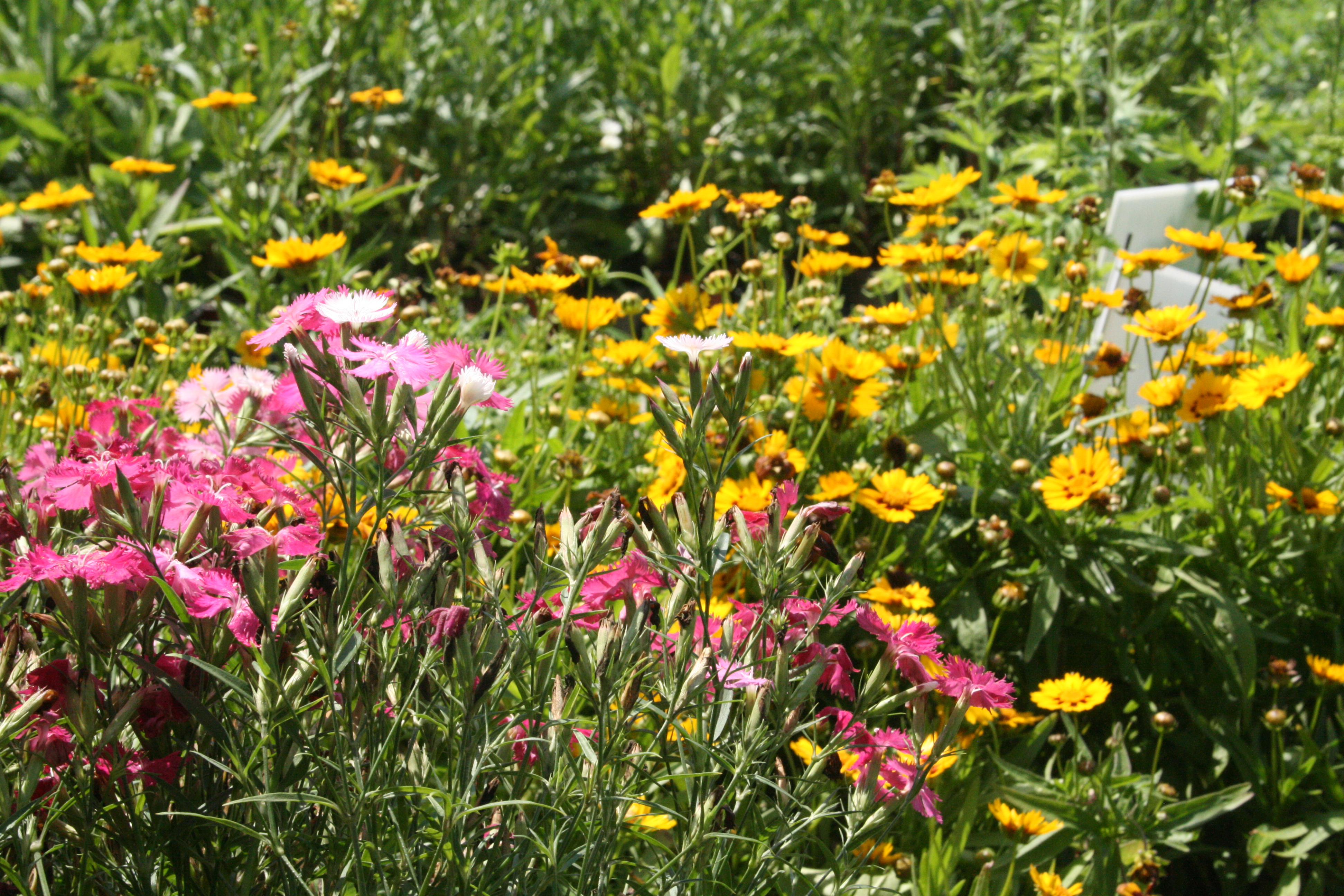 mixed perennials.JPG