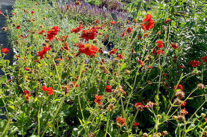 Can't get enough of this Geum!