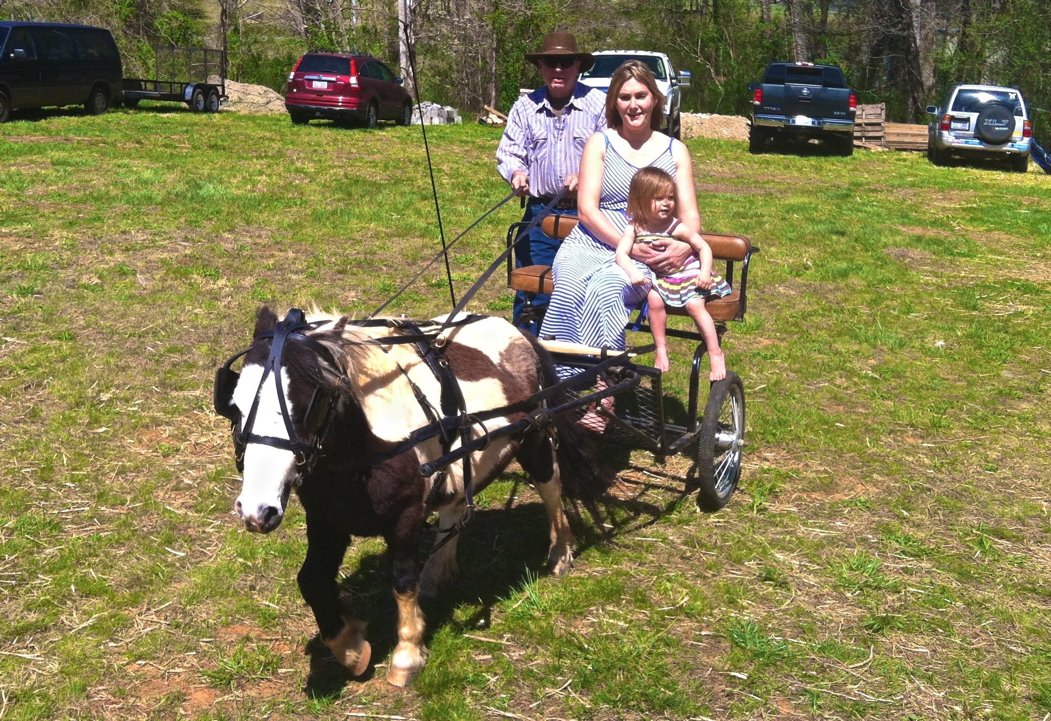 Miniature pony carriage rides