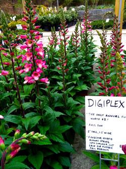 Digiplexis