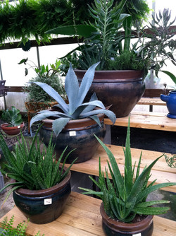 Desert Pots.JPG