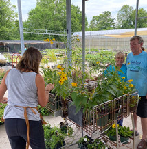 The Lake Lure Flowering Bridge is a regular at our Plant Donation Day.