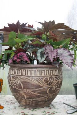 Begonia Pot.JPG