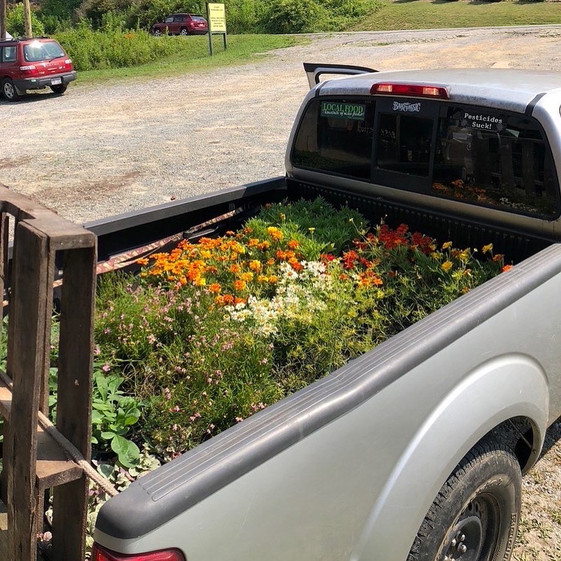 John got a stunning array of annual and perennial flowers.