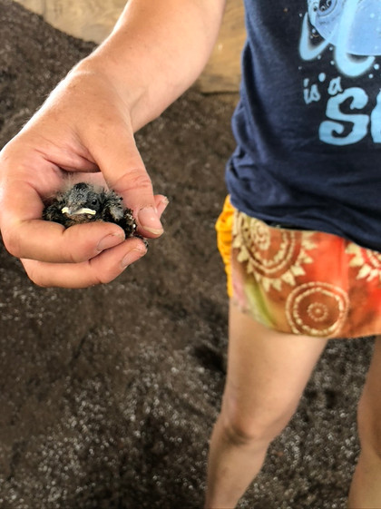 The baby bird that landed on our soil pile.