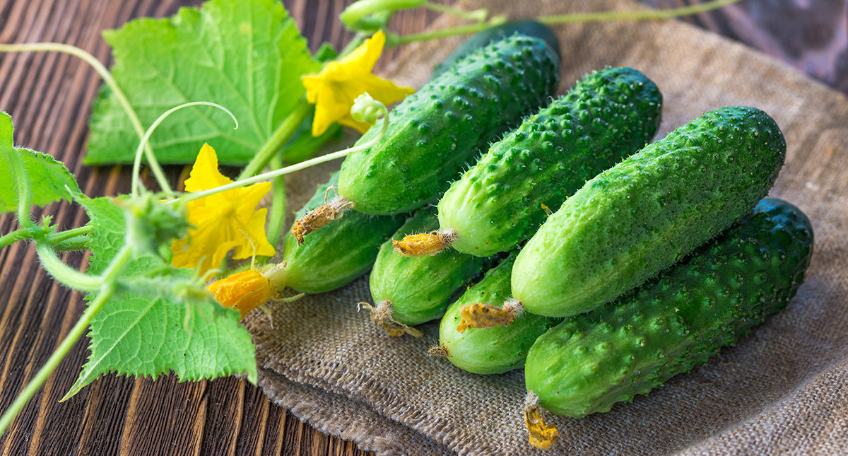 Fresh Cucumber Pedicure