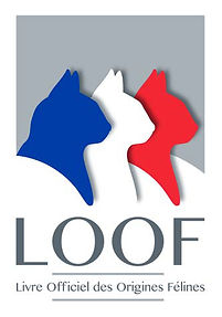 logoLOOF2014.jpg