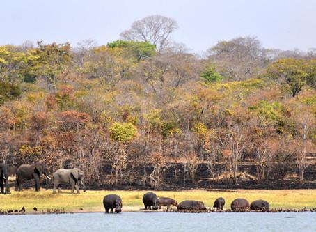 Malawi Elephants Close Encounters