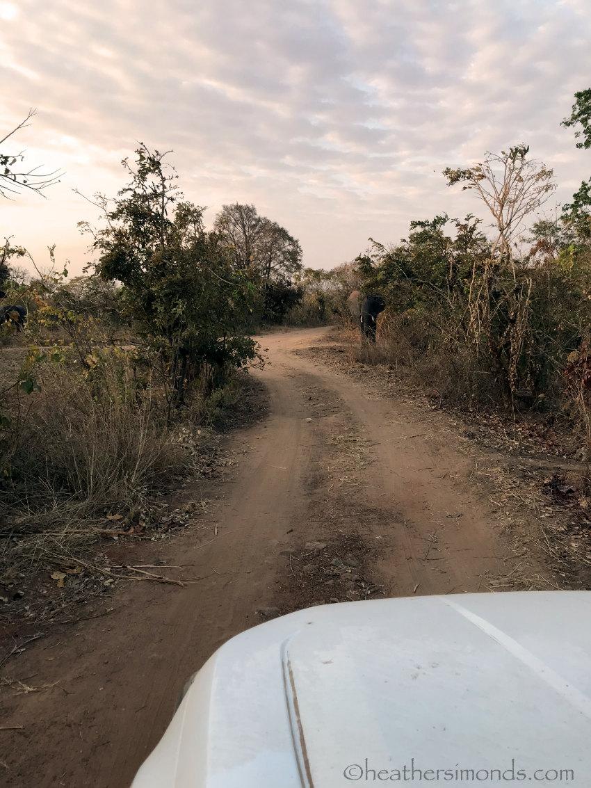 Lifupa Malawi Elephant