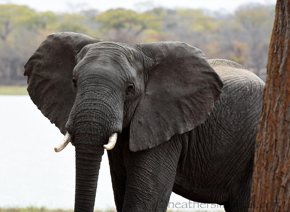 Lifupa, African, Africa