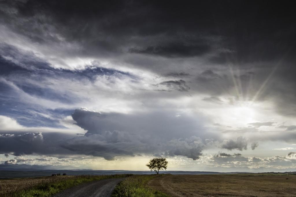 Lonely Prairie Tree