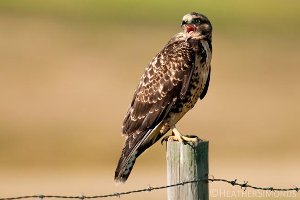 bird, birding, Glenbow