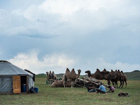 Mongolian Camel Trek