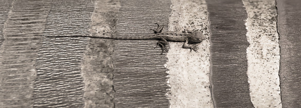 gecko, red fort, India