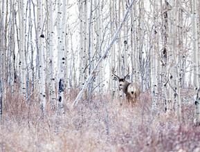 Canada buck