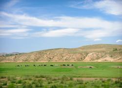 Trans Siberia, Mongolia