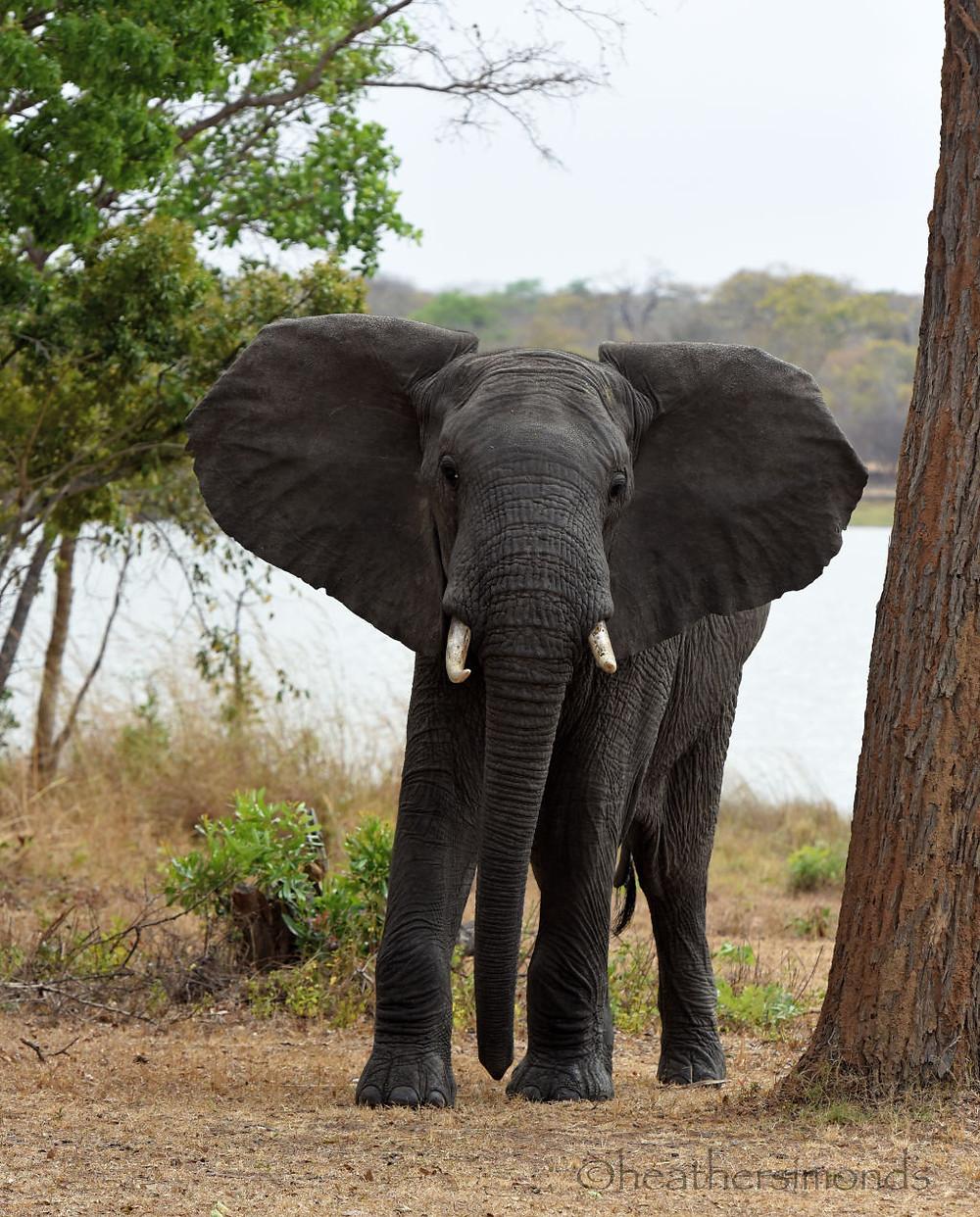Malawi, Africa, African