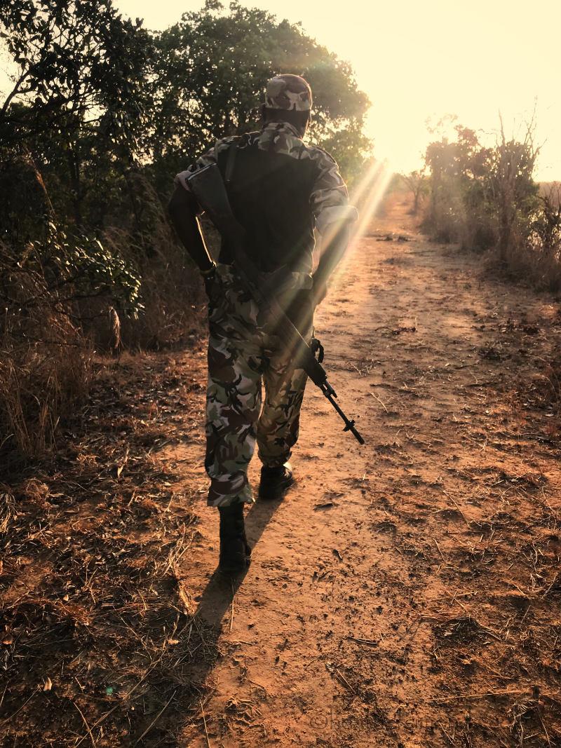 African, safari, Malawi