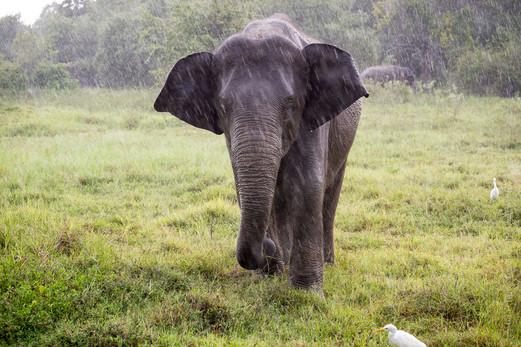 Elephants-7966.jpg