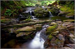 British Columbia Rainforest