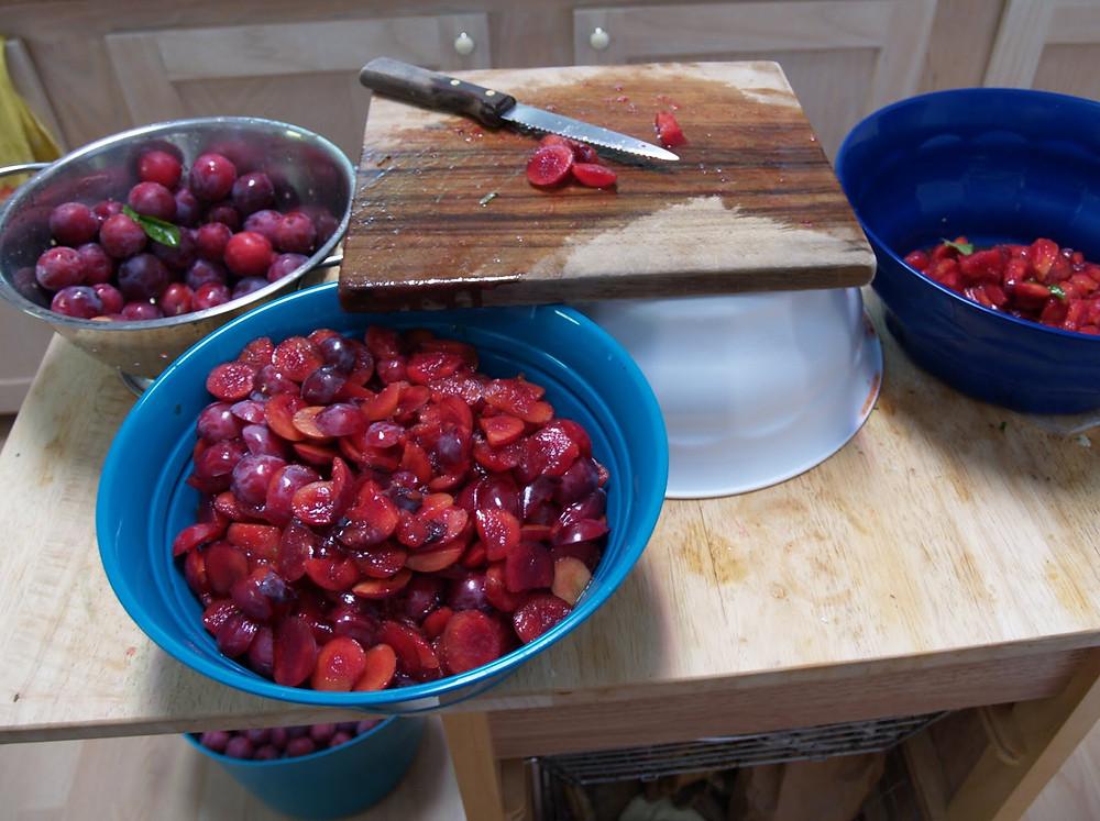 © Dan Schellenberg plum harvest2.jpg